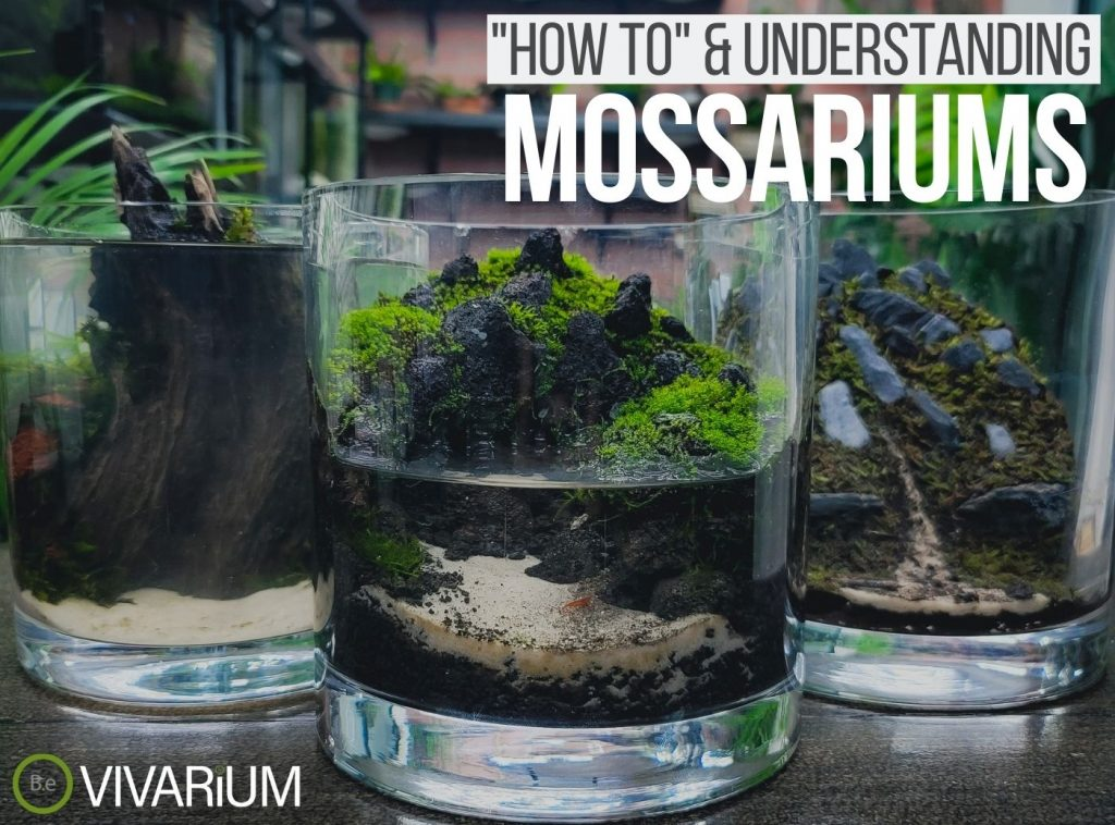 Mossarium: Everything You Need To Know