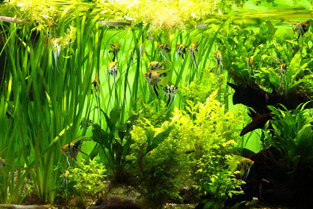 Angel Fish With Vals & Ferns