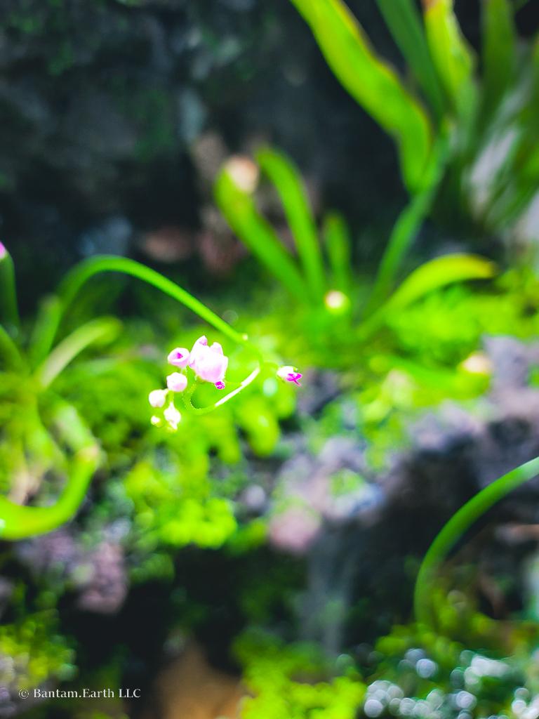 Aqua-Terrarium Plants