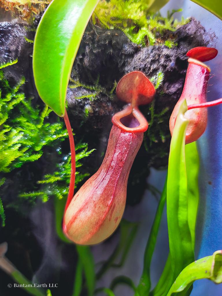 Carnivorous Aqua-terrarium Plants