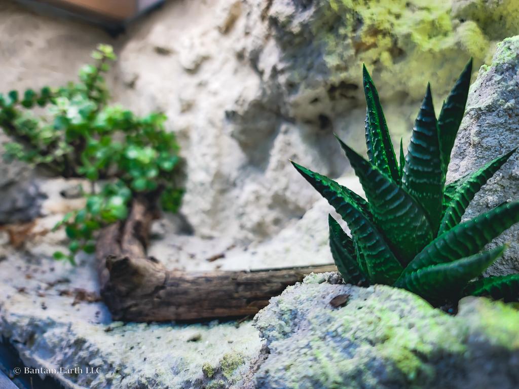 Desert Terrarium Plants