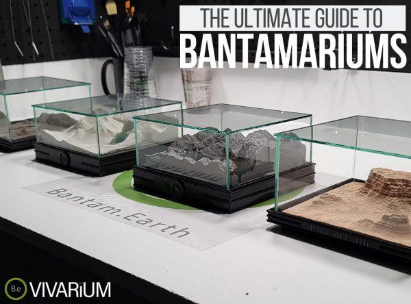 Bantamarium: Everything You Need To Know